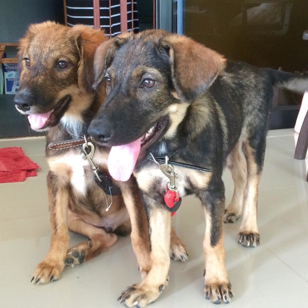 Puppies at Health Oasis resort